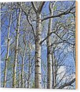 White Trees Against A Blue Sky Wood Print