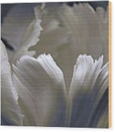 White Tulip Wood Print