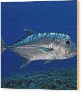 White Ulua Wood Print