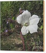 Small White Morning Glory Wood Print