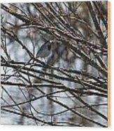 White Wagtail Wood Print