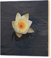 White Water-lily 2 Wood Print