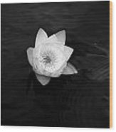 White Water-lily 3 Wood Print