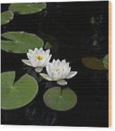 White Water-lily 4 Wood Print