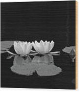 White Water-lily 7 Wood Print