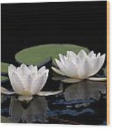 White Water-lily 8 Wood Print
