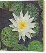 White Water Lily Wood Print by Andee Design