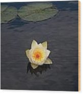 White Water-lily Wood Print