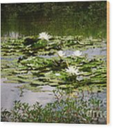 White Water Lily Pond Wood Print