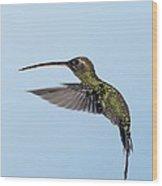 White-whiskered Hermit Hummingbird Wood Print