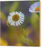 White Wildflower On Pastels Wood Print by Bill Tiepelman