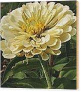 White Zinnia Wood Print