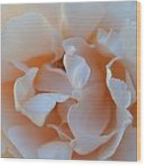 Whitest Rose Wood Print by Naomi Berhane