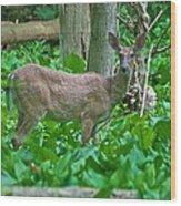 Whitetail 7335 Wood Print