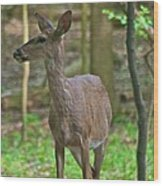 Whitetail 7338 Wood Print
