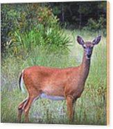 Whitetail Deer IIi Wood Print