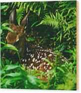 Whitetail Fawn And Ferns Wood Print