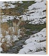 Whitetail Fawn In Winters Stream  Wood Print