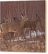 Whitetails On The Move Wood Print