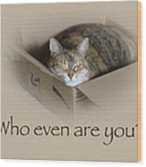 Who Even Are You - Lily The Cat Wood Print