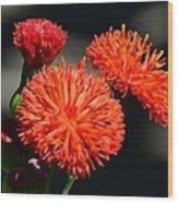 Who Flower Wood Print