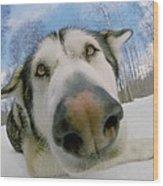 Wide Angle Dog Wood Print