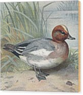 Widgeon, Historical Artwork Wood Print