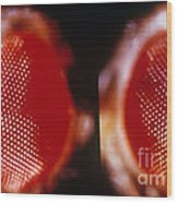 Wild & Vermillion Eyes Of Drosophila Wood Print