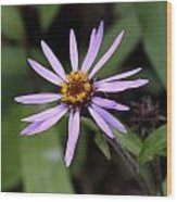 Wild Aster Wood Print