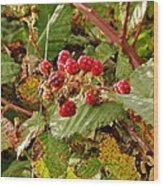 Wild Berries Wood Print by Liz Vernand