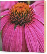 Wild Berry Purple Cone Flower Wood Print