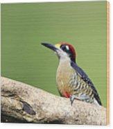 Wild Black-cheeked Woodpecker Wood Print