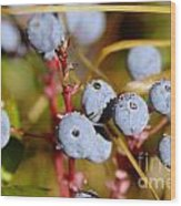Wild Blue Berries With Water Drops  Wood Print