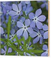 Wild Blue Phlox Flower 1 A Wood Print