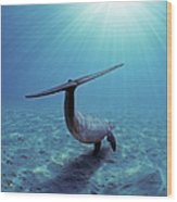 Wild Bottlenose Dolphin Wood Print