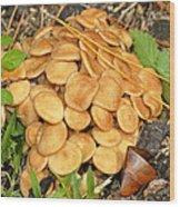 Wild Bunch Wood Print