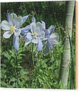 Wild Columbine In An Aspen Glade Wood Print