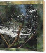 Wild Cottonwood Fibers Wood Print