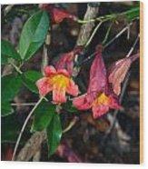 Wild Crossvine Wood Print