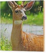 Wild Deer Wood Print