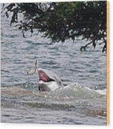 Wild Dolphin Feeding Wood Print