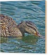 Wild Duck Wood Print