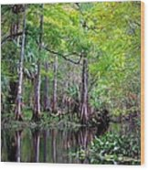 Wild Florida - Hillsborough River Wood Print