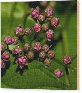 Wild Flower Blossoms 2 Wood Print