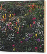 Wild Flower Field In Early Summer Wood Print