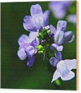 Wild Flower Wood Print