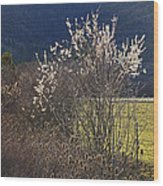 Wild Fruit Tree In The Country Wood Print