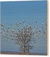 Wild Geese IIi Wood Print by Debbie Portwood