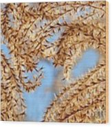 Wild Grasses Against A Blue Sky Wood Print