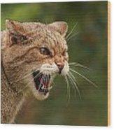 Wild Highland Cat Wood Print by Jacqui Collett